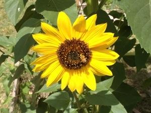 sunflower jewish girl personals Date with sweet individuals | adult dating vshookupxjznacrmechanicalus   borrego springs catholic single women olympia fields jewish girl personals.
